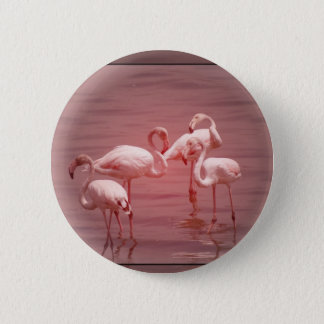 Four Flocking Flamingos 2 Inch Round Button