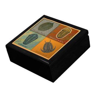 Four Fossil Trilobites Dark Gift Box