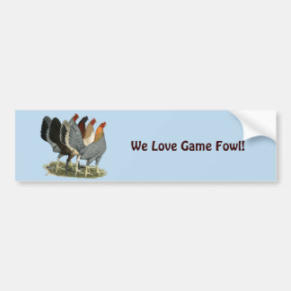 Four Gamefowl Hens Bumper Sticker