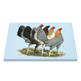 Four Gamefowl Hens Canvas Print