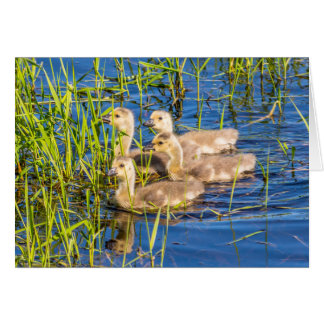 Four Goslings Greeting Card
