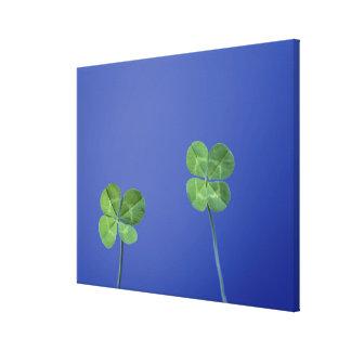 Four-leaf clovers canvas print
