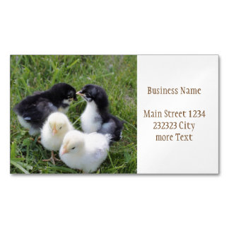 four lovely chicks 	Magnetic business card