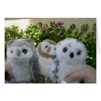 Four O'Clock Owls Card