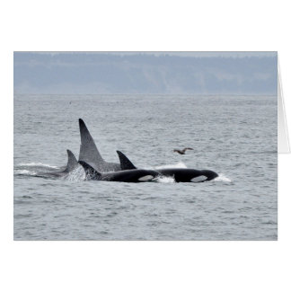Four Orca Whales Swimming Together Card