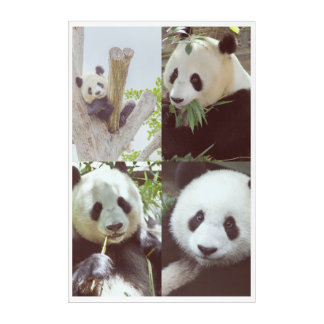 four panda images collage acrylic print