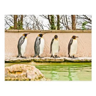 four penguins postcards
