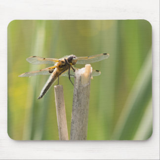 Four-spotted Chaser Dragonfly Mouse Pad