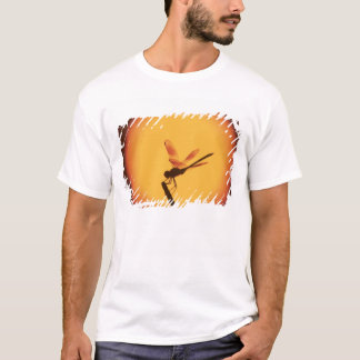 Four-spotted Pennant, Brachymesia gravida, T-Shirt
