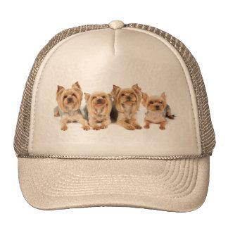 Four yorkies trucker hat
