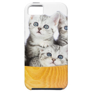 Four young cats sitting in wooden bowl on white case for the iPhone 5
