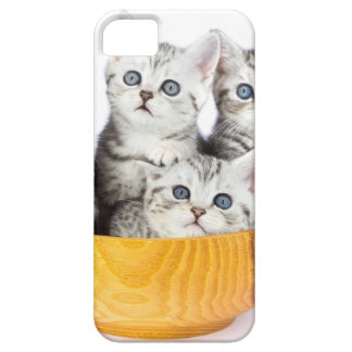Four young cats sitting in wooden bowl on white iPhone 5 cases