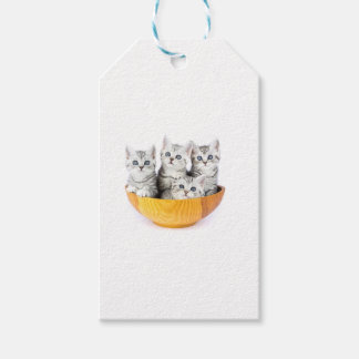 Four young cats sitting in wooden bowl on white pack of gift tags