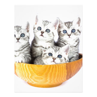 Four young cats sitting in wooden bowl on white personalized letterhead