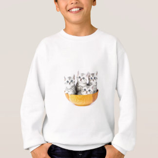 Four young cats sitting in wooden bowl on white sweatshirt