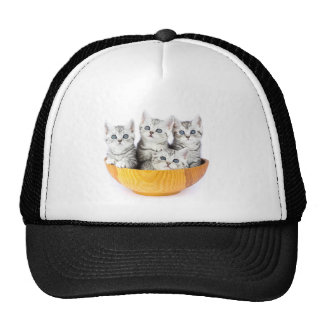 Four young cats sitting in wooden bowl on white trucker hat
