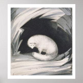 Fox arctique, de 'récit d'un deuxième voyage dedan posters
