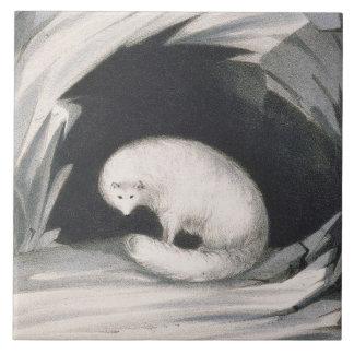 Fox arctique, de 'récit d'un deuxième voyage dedan carreaux