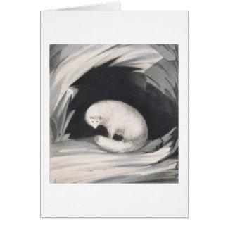 Fox arctique, de 'récit d'un deuxième voyage dedan carte de vœux