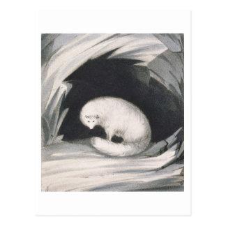 Fox arctique, de 'récit d'un deuxième voyage dedan cartes postales
