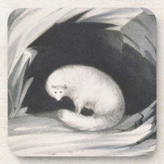 Fox arctique, de 'récit d'un deuxième voyage dedan dessous-de-verre