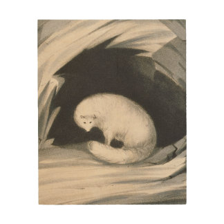 Fox arctique, de 'récit d'un deuxième voyage dedan impressions sur bois