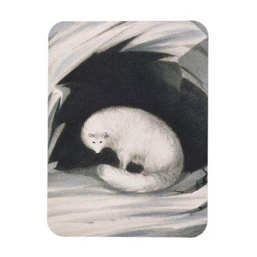 Fox arctique, de 'récit d'un deuxième voyage dedan magnet rectangulaire