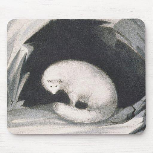 Fox arctique, de 'récit d'un deuxième voyage dedan tapis de souris