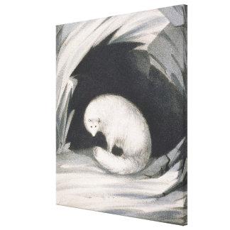 Fox arctique, de 'récit d'un deuxième voyage dedan impressions sur toile