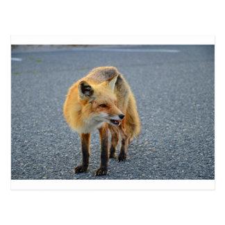 Fox Barking Postcard
