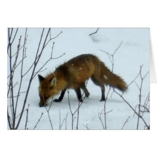 Fox in Snow -Blank Card
