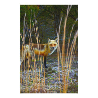 Fox in Woods Stationery Design