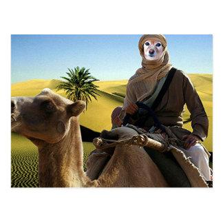 Fox Is Lawrence Of Arabia Postcard