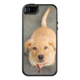 Fox Red Labrador Puppy 2 OtterBox iPhone 5/5s/SE Case