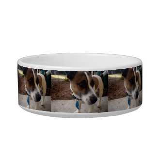 Fox Terrier Attraction Small Ceramic Pet Bowl