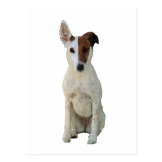 Fox Terrier Smooth dog beautiful photo postcard