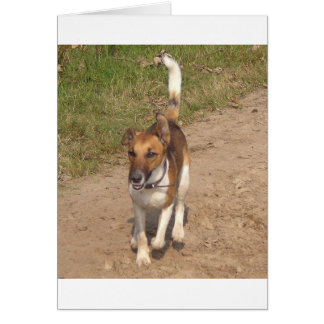 Fox_terrier_smooth_in_action Card