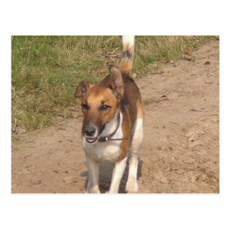 Fox_terrier_smooth_in_action Postcard