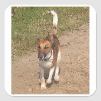 Fox_terrier_smooth_in_action Square Sticker