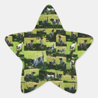 Fox Terrier, The Hard Day, Star Sticker
