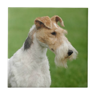Fox Terrier Tile