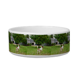 Fox Terriers Playing In The Garden, Bowl