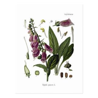 Foxglove Postcard