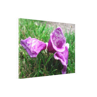 Foxgloves on the Ground Stretched Canvas Prints