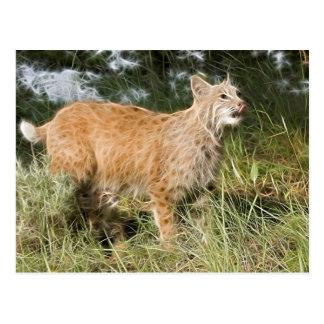 Fractalius Bobcat Postcard