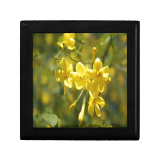 Fragrant Yellow Flowers Of Carolina Jasmine Gift Box