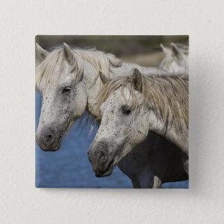 France, Camargue. Horses run through the 2 Inch Square Button