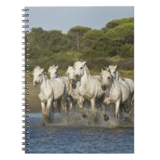 France, Camargue. Horses run through the estuary 3 Spiral Note Book