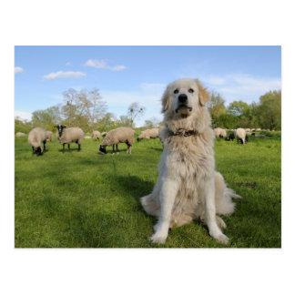France, Centre, Chatillon-sur-Loire. Dog Postcard