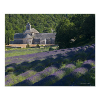 France, Gordes, Senaque Abbey, lavender field Poster